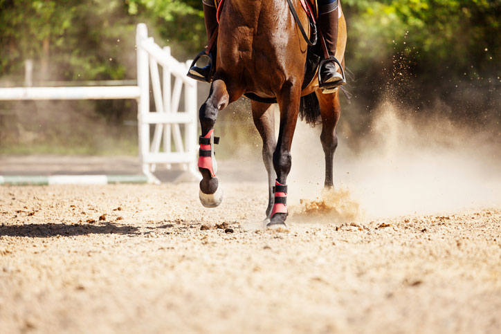 picture-of-racehorse-running-at-sand-racetrack
